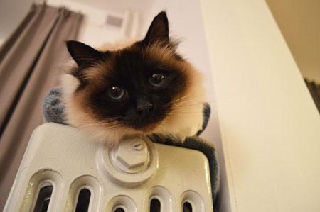Mejores sistemas de calefacci n para el hogar bdbn - Cual es el mejor sistema de calefaccion ...
