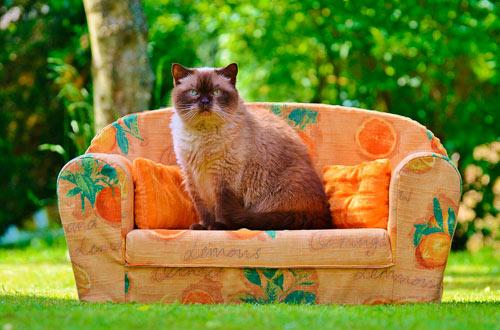 elegir sofa