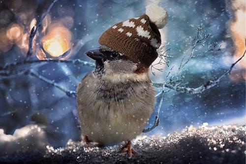 ahorrar invierno